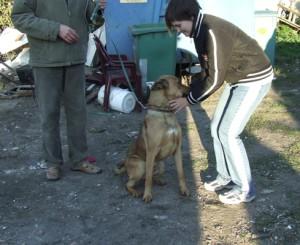 wolontariuszka Agnieszka z przytuliskowym podopiecznym - spacer z psem