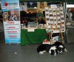 wystawa psów pomoc psów naszcyh wolontariuszy z w zbiórce darów dla bezdomnnych zwierząt