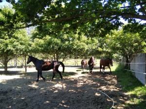 konie w Zakątku